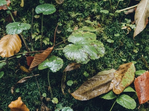 Green forest floor with fallen leaves and small plants
