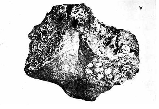The Messum's Stone, as it appears in a textbook, resembles a human face in profile